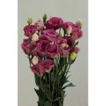 Lisianthus Excalibur Rose