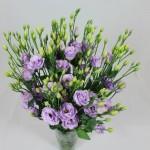 lisianthus rosita 3 lavender