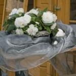 begonia tuberhybrida nonstop white