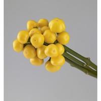capsicum rio yellow