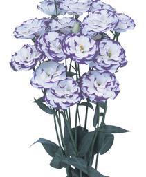 lisianthus excalibur blue picotee