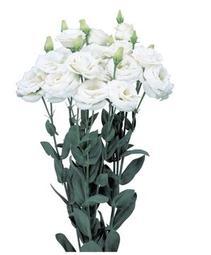 lisianthus rosita 3 white