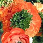ranuncolo reinette orange