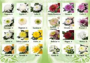 Depliant Novità Crisantemi 2016
